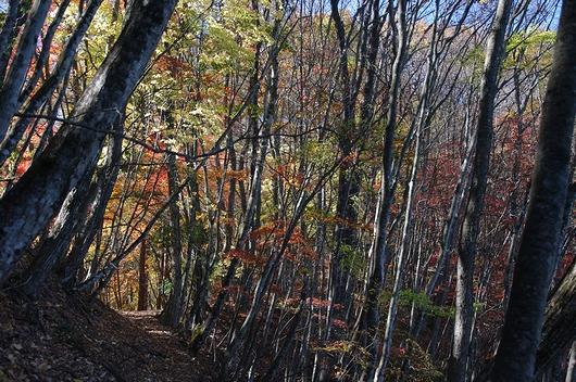 d92a230bc2 日の差さない北側の登山道から、明るい紅葉の道へ